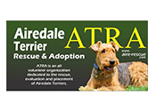 Airedale Terrier Rescue