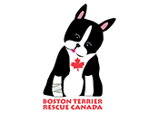 Boston Terrier Rescue Canada