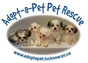 Adopt a pet Pet Rescue