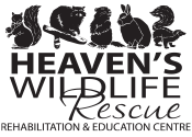 Heaven's Wildlife Rescue