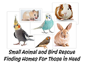 Small Animal and Bird Rescue